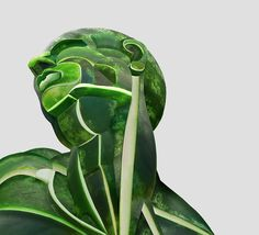 http://www.boredpanda.com/i-create-realistic-human-anatomical-parts-from-fruits-vegetables/