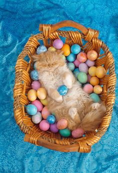 Look what the Easter Bunny brought! Kittens And Puppies, Cute Cats And Kittens, I Love Cats, Cute Cat Wallpaper, Easter Wallpaper, Easter Cats, Easter Bunny, Easter Food, Cat Calendar