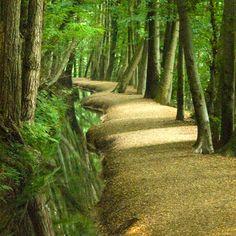 Wandelen in het bos met het riviertje. The 'Sint Jansberg' at Plasmolen,