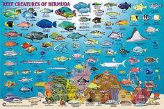Bermuda fantastic sailing destination home of the 2017 Americas