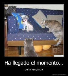 Present perfect. Ask students- what do you think venganza means from the pic? Spanish Posters, Spanish Jokes, Spanish Grammar, Spanish Teacher, Spanish Classroom, Teaching Spanish, Spanish Tenses, Preterite Spanish, Present Perfect Spanish