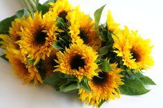 sunflower 11/10/2013