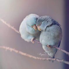 Magici ritratti di pappagallini innamorati negli scatti di Rupa Sutton