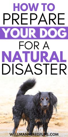 Pet preparedness for dog owners: How to prepare your dog for a natural disaster.