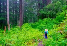 12 Portland Hiking Trails Worth Getting Out of Bed For - Larch Mountain Crater Loop