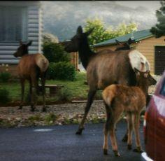 Estes Park, Colorado, Horses, Animals, Aspen Colorado, Animales, Animaux, Animal, Animais