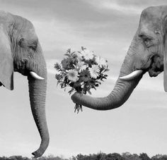 Elephants are projected to be the next species able to communicate verbally to one another using a constructed elephabet!