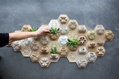 A living wall collage - succulents. Expandable, etc.