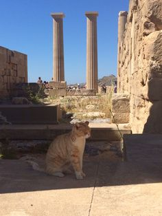Akropolis cat on Rhodos