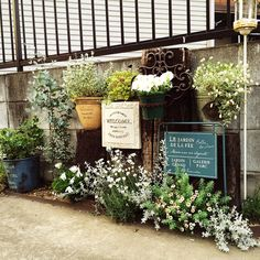 Entrance/観葉植物/ナチュラル/植物/グリーン/アンティーク...などのインテリア実例 - 2015-05-14 09:27:34 | RoomClip (ルームクリップ)