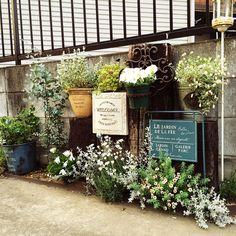 Entrance/観葉植物/ナチュラル/植物/グリーン/アンティーク...などのインテリア実例 - 2015-05-14 09:27:34   RoomClip (ルームクリップ) Green Garden, Garden Plants, Garden Styles, Ciel, Planting Flowers, Outdoor Living, Brita, Gardening, Balcony
