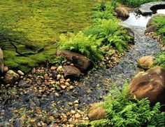 backyard stream | GARDENING. #Backyard Stream