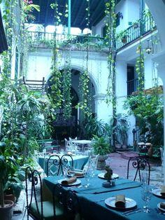 "Havana (Beautiful Indoor Plants).   ""Blue as a night in Cuba.""-neruda"