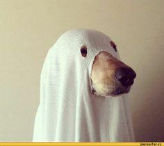 собака-костюм-хеллоуин-приведение-427086.jpeg (600×522)