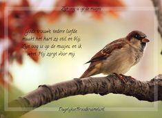 Gods trouwe, tedere liefde, maakt het hart zo stil en blij, Zijn oog is op de musjes, en ik weet Hij zorgt voor mij. Volledige tekst Zijn oog is op de musjes Hieronder de volledige tekst van tekst Zijn oog ... Lees meer