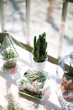 Urban Outfitters - Blog - UO DIY: Terrariums