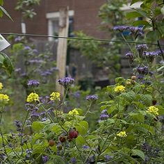 Edible Landscaping - Nature and Environment - MOTHER EARTH NEWS