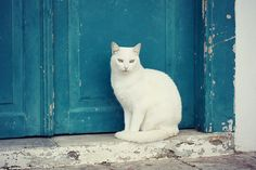 Greece days 8-10 Hydra Island 57 by juliepersons, via Flickr