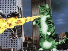 CatMonster.