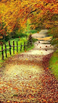 Autumn Scenery Wallpaper Wallpapers) – Wallpapers and Backgrounds Beautiful World, Beautiful Places, Beautiful Pictures, Beautiful Scenery, House Beautiful, Autumn Scenery, Scenery Wallpaper, Fall Wallpaper, Leaves Wallpaper