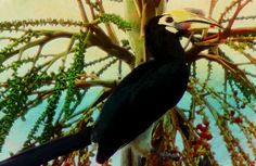 "Check out my art piece ""Hornbill"" on crated.com"