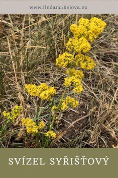 Herbalism, Plants, Honey, Herbal Medicine, Plant, Planets