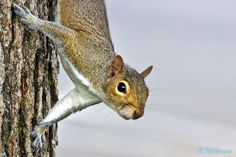 Mr. Attentive  #500px #squirrel  #nature #animals #photography