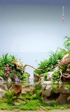 Beautiful #Paludarium with Superb pictures quality