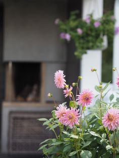 Det blomstrer i hagen min – Ingrid Tunheim Flowers, Plants, Pink, Plant, Royal Icing Flowers, Flower, Florals, Floral, Planets