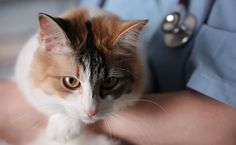 7 Tips to Make Vet Visits Less Stressful for Cats