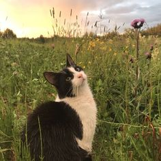 Imagem de cat, aesthetic, and kitty Cat Aesthetic, Nature Aesthetic, Cute Little Animals, Baby Animals, I Love Cats, Cool Cats, Gato Gif, Cute Creatures, Pretty Cats