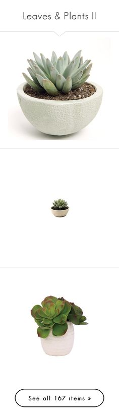 """""""Leaves & Plants II"""" by jesuisunlapin ❤ liked on Polyvore featuring plants, leaves, fillers, home, fillers - plants, decor, saying, quotes, phrase and magazine"""