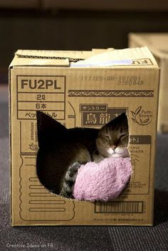 Cats love boxes and what a better way to reuse your moving boxes from Ecosmartboxes.com. A little paint will be a fun arts and crafts project for the kids to decorate their pets new home.