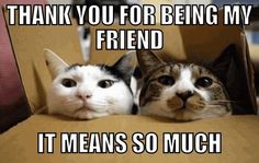 Happy Boxing Day Everyone. but this is… Happy Boxing Day Everyone. Funny Animal Quotes, Cat Quotes, Funny Animal Pictures, Funny Animals, Cute Animals, Funniest Animals, Animal Pics, Funny Sayings, Animal Sayings