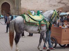 Typical Moroccan Horse Saddle, Meknes, Morocco