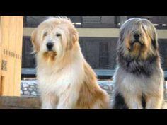 Wonderful Korea Chubby Adorable Dog - 0dcc2cfdf3d75927c094e44135d0b7d1  Best Photo Reference_907360  .jpg