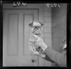 Brussels Griffon. I believe this is a dog