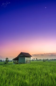 Vivid Rice Fields For the full image head to my blog > http://www.brucelevick.com/vivid-rice-fields/ Always be patient when the sun has set as often the best light happens for 20 minutes afterwards…  #A6500, #Bengkulu, #Colours, #Indonesia, #Mysumatra, #Photography, #RiceFields, #Sony, #Sumatra, #Sunset, #Travel, #Vivid