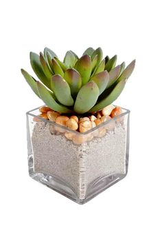 "Small faux succulent in a glass cube with sand and rocks.Each succulent arrangement is hand crafted using the finest products and techniques. Perfect for a coffee table or console as a touch of greenery.    Measures 5""W x 5""D x 5""H. Glass Cube Succulent-Faux by Heather Scott Home & Design. Home & Gifts - Home Decor - Decorative Objects Austin Texas"