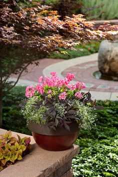 Geranium, Euphorbia, Sweet Potato Vine, 20 in. Could do smaller with fewer Euphorbia and Sweet Potato Vine (maybe 2 each instead of 3 each).