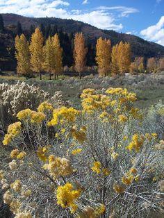 Bair Ranch, Colorado