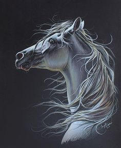Arabian Horse Colored Pencil Drawing, Original Artwork, 16x20 on Etsy