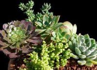 """How To Grow Cacti And Succulents In Pots"" ~ Types Of Cacti And Succulents For Containers"