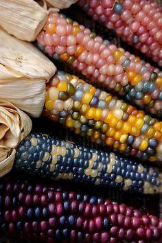 Glas Gem Corn / Glasperlen-Mais (Zea mays) Fruit Love, Still Life Fruit, Fruit And Veg, Fruits And Vegetables, Rainbow Corn, Colored Corn, Glass Gem Corn, Balcony Herb Gardens, Popcorn Seeds