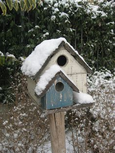Birds house under the snow