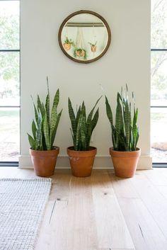 Fixer Upper Season 4 | Plants of Season 4 | Chip and Joanna Gaines | Waco, TX | Garden |