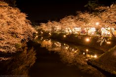 [RRS] stalls lights and lighted cherry blossoms by gemapozo Via Flickr: During Sakura festival days, it is held stalls.