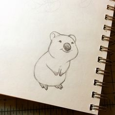 Warm up sketch. For you, Internet: a happy little #quokka. (Those three worlds in a row might be super redundant, actually.) #sketch #animalillustration #cheeks