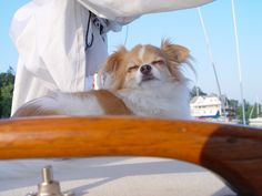 Love being on the sailboat! Ottawa River - Canada