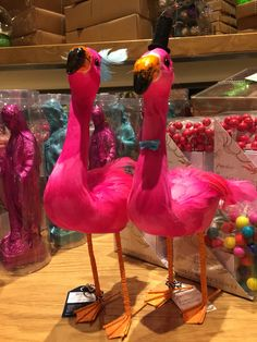 Mr and Mrs Flamingo